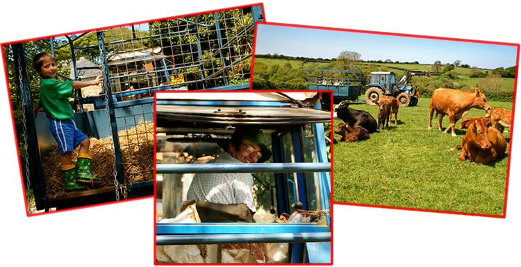 take the tractor and trailer tour at higher lank farm toddler friendly holidays