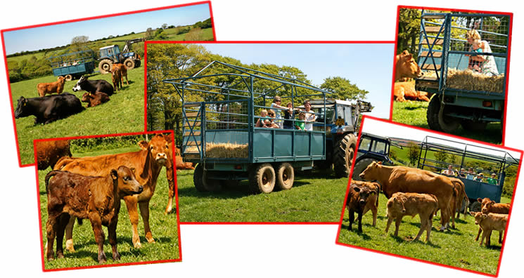 tractor and trailer ride at Higher Lank Farm children friendly family farm holidays