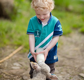 bottle feeding orphan lambs at higher lank farm holidays for families with small children