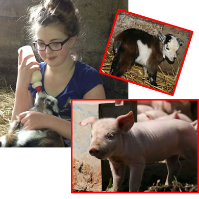 help us to bottle feed the baby animals at higher lank farm