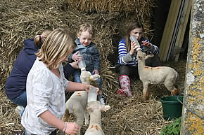 feed the orphan lambs at higher lank farm