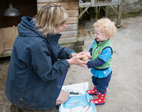 baby chicks at higher lank farm holidays for families with small children