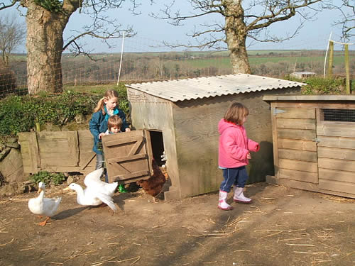 collecting eggs at higher lank farm, bodmin