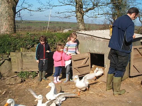 egg collecting at higher lank farm, bodmin