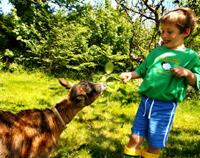 toddler holidays - orphan lambs and goats to meet