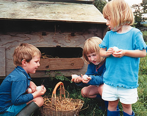 collecting the eggs at higher lank farm children-friendly farm holidays in cornwall