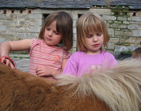 ponies at higher lank farm children-friendly holidays in cornwall