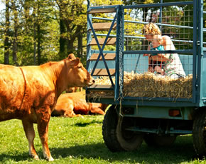 child friendly farm holidays in cornwall