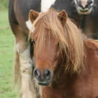 george the pony family friendly holidays cornwall uk