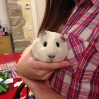 rupert the guinea pig children friendly holidays cornwall uk