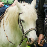millie the pony ride pony twin friendly holidays cornwall