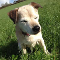 Oscar the family dog family friendly farm holidays cornwall uk
