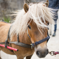 pippa the pony higher lank farm family friendly holidays cornwall uk